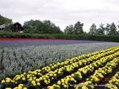 20110714富良野富田農場:DSCN0233.JPG