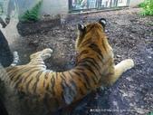 20110713北海道旭川市旭山動物園:P1170279.JPG
