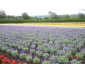 20110714富良野富田農場:DSCN0234.JPG