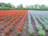 20110714富良野富田農場:P1180287.JPG
