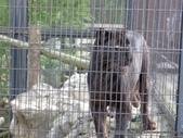 20110713北海道旭川市旭山動物園:P1170313.JPG