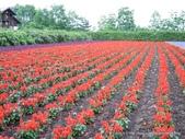 20110714富良野富田農場:DSCN0235.JPG