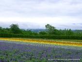 20110714富良野富田農場:P1180288.JPG
