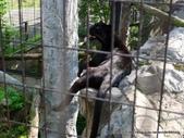 20110713北海道旭川市旭山動物園:P1170316.JPG