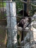 20110713北海道旭川市旭山動物園:P1170318.JPG