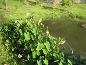 2011-10-27-照門-新埔-九芎湖埤塘窩:照門-新埔-九芎湖埤塘窩_064.jpg