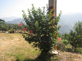 2011-10-29-大山背休閒農區:大山背休閒農區_081.JPG