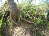 2011-10-29-大山背休閒農區:大山背休閒農區_091.JPG