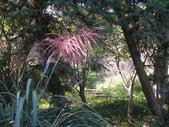 2011-10-29-大山背休閒農區:大山背休閒農區_020.JPG