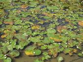 2011-10-27-照門-新埔-九芎湖埤塘窩:照門-新埔-九芎湖埤塘窩_087.jpg