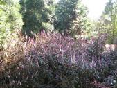 2011-10-29-大山背休閒農區:大山背休閒農區_038.JPG
