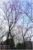 2012-桃源仙谷春遊記:P1500339.JPG