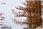 2012-木棉花的春天:P1520338.JPG