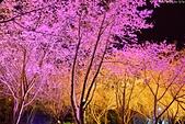 2016 紅粉佳人.武陵農場:DSC_6893-1.jpg