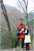 2012-桃源仙谷春遊記:P1500342.JPG