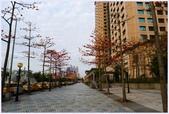 2012-木棉花的春天:P1520339.JPG