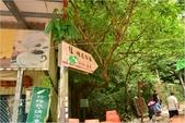 2015 油桐花.承天禪寺及桐花公園:DSC_6576.JPG