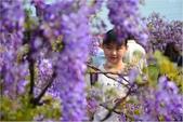 2015 紫藤咖啡園:DSC_2372.JPG