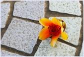 2012-木棉花的春天:P1520341.JPG