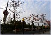 2012-木棉花的春天:P1520349.JPG