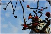 2012-木棉花的春天:P1520352.JPG