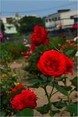 2015 紫藤咖啡園:DSC_2414.JPG