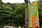 2015 油桐花.承天禪寺及桐花公園:DSC_6729.JPG