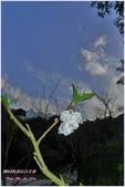 2012-桃源仙谷春遊記:P1500321.JPG