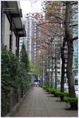 2012-木棉花的春天:P1520427.JPG