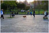 2012-板橋音樂公園隨拍:P1510953.JPG