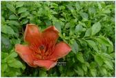 2012-木棉花的春天:P1520429.JPG
