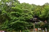 2015 油桐花.承天禪寺及桐花公園:DSC_6744.JPG