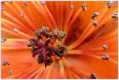 2012-木棉花的春天:P1520444.JPG