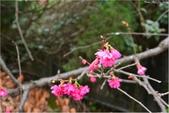 2015 櫻.平鎮工業區:DSC_1044.JPG