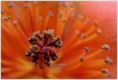 2012-木棉花的春天:P1520499.JPG