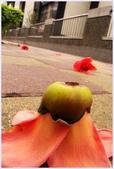 2012-木棉花的春天:P1520539-1.jpg