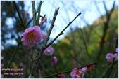 2012-桃源仙谷春遊記:P1500331.JPG
