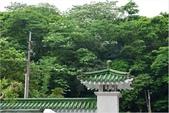 2015 油桐花.承天禪寺及桐花公園:DSC_6525-1.jpg