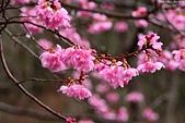2016 紅粉佳人.武陵農場:DSC_6690-1.jpg