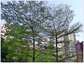 2012-木棉花的春天:P1520048.JPG