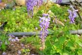 2015 紫藤咖啡園:DSC_2461.JPG
