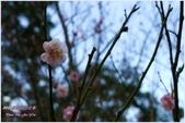 2012-桃源仙谷春遊記:P1500332.JPG