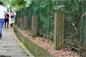 2015 油桐花.承天禪寺及桐花公園:DSC_6463.JPG