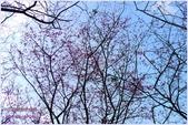 2012-桃源仙谷春遊記:P1500338.JPG
