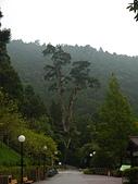明池國家森林遊樂區:P1120487.JPG