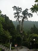 明池國家森林遊樂區:P1120489.JPG