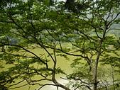 明池國家森林遊樂區:P1120498.JPG
