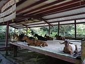 頭城農場遊趣:P1110102.JPG