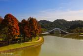 1031231-台北市。大湖公園錦帶橋。落羽松: