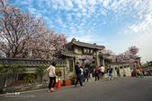 20160405-台北市。東方寺櫻花之美: